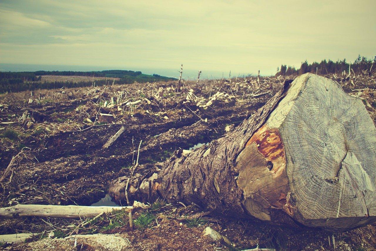 wycinka drzew Śląsk